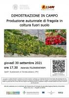 Produzione autunnale di fragola in coltura fuori suolo - Dimostrazione in campo
